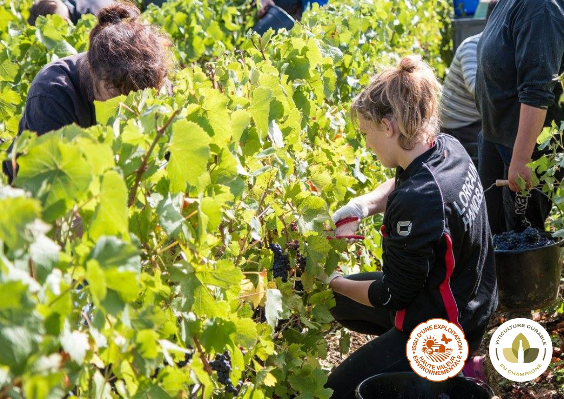 Olivier-devitry-Une-Maison-de-Champagne-engagee-dans-la-viticulture-raisonnee