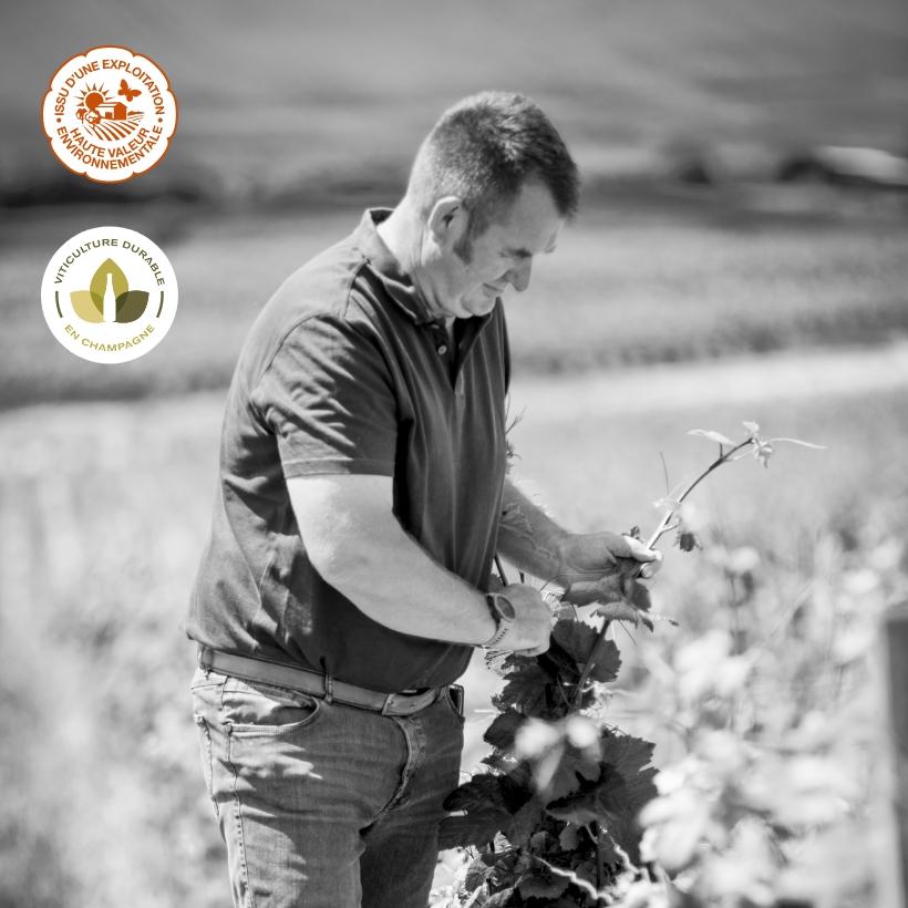 olivier-devitry-maison-une-viticulture-raisonnee